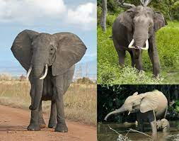 Photo of 3 different elephants