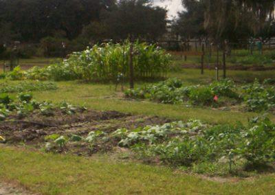 Picture of various garden crops