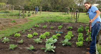 Picture of staff planting crops
