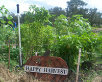 Picture of a Happy Harvest sign in front of crop field
