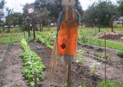 Picture of scarecrow protecting field of crops