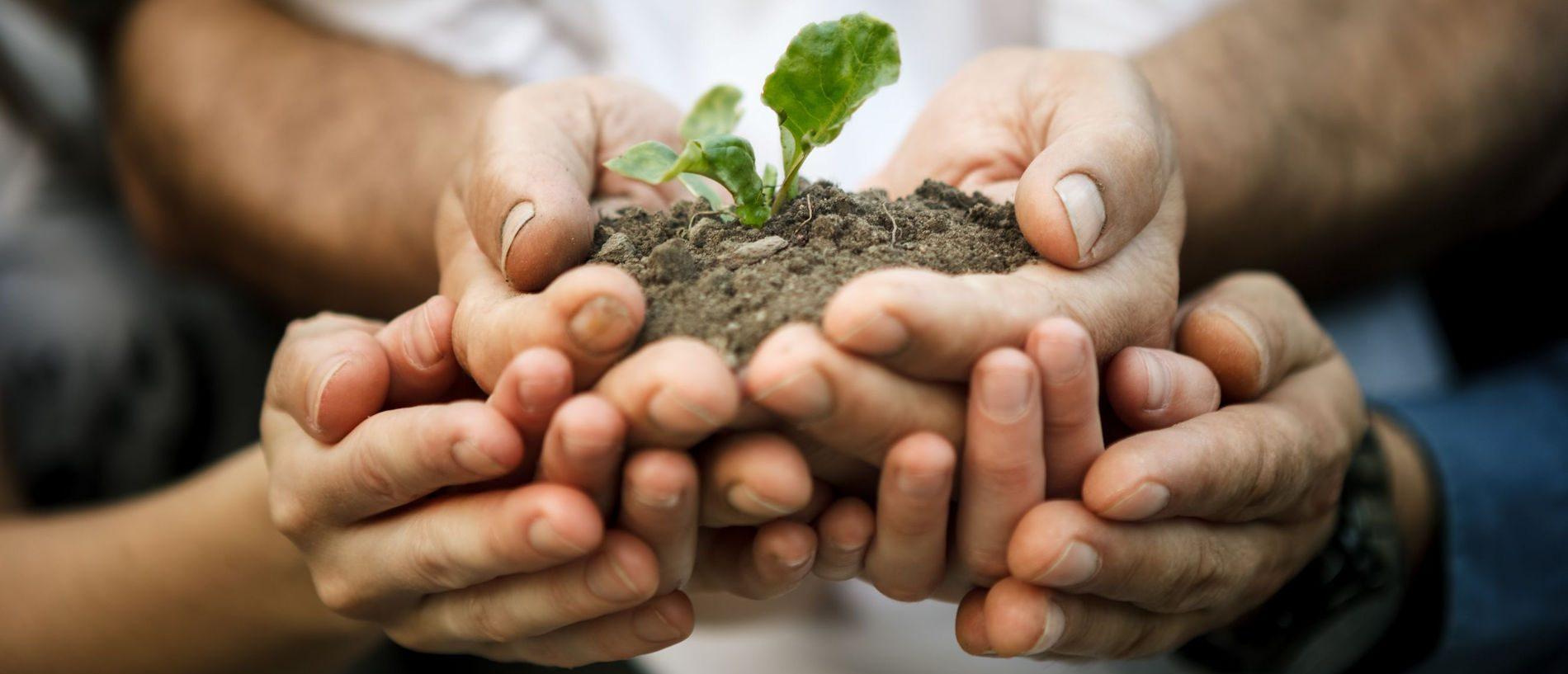Holding-Soil-in-hands