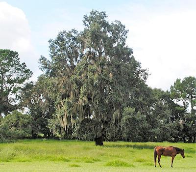 Horse Farm Ocala FL