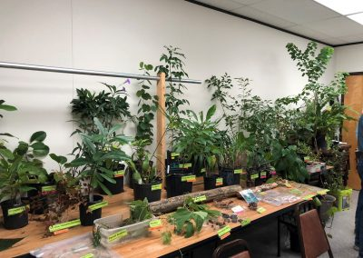 Pictured are various plants that were used as exhibits at a plant identification class.